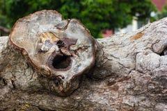 Trädstubben liknar en mänsklig framsida royaltyfria bilder