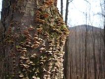 Trädsvampar Arkivbild