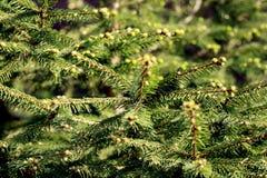 Trädtextur Arkivbild