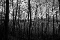 Trädtextur Fotografering för Bildbyråer