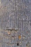 Trädtexturbakgrund Arkivfoton