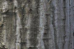 Trädtexturen Royaltyfri Bild