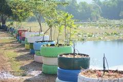 Trädtillväxt i färgrikt hjul royaltyfria bilder
