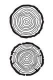 Trädtillväxtcirklar Arkivfoton