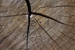 Trädtimmertextur Royaltyfri Bild