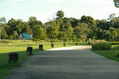 Trädträdgården parkerar Arkivfoto
