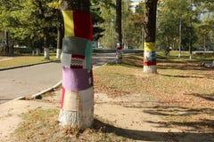 Trädtröja (det klädda trädet) Arkivbild