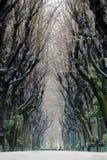 Trädtunnel arkivfoton