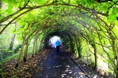 Trädtunnel, Christchurch, Dorset Arkivfoton