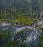 Trädtunnel i Banff Kanada Royaltyfri Fotografi