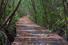 Trädtunnel i Mang på slingan för Laem Phak Bia Petrove skognatur arkivfoton