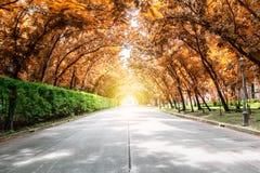 Trädtunnel med solljus, höstlanscape royaltyfria bilder