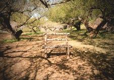 Trädtunnel och stol i tappningstil Royaltyfri Foto
