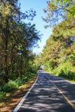 Trädväg Royaltyfri Bild