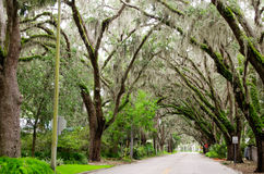 Trädväg - Florida - USA Arkivbild