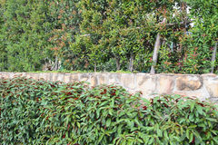 Trädvägg Royaltyfri Fotografi