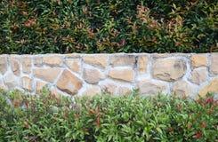 Trädvägg Royaltyfria Bilder