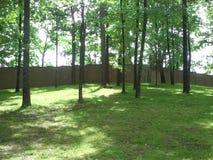 Trädvägg Arkivfoto