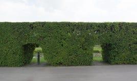 Trädväggen Royaltyfri Fotografi