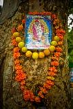 Trädvälsignelse, Delhi, Indien Royaltyfri Foto