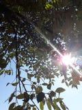 Trädväxt Fotografering för Bildbyråer