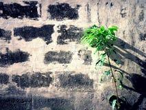 Trädväxt och en betongvägg Royaltyfri Fotografi