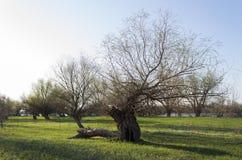 Trädvåräng nära floden royaltyfri foto