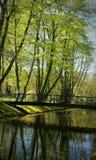 Trädvatten Royaltyfria Bilder