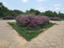 Trädvinkelsikten av blommor fotografering för bildbyråer