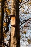 Träfågelhus på ett träd Royaltyfria Foton
