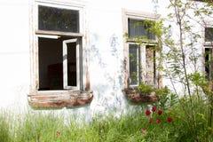 Träfönster för gammalt lantligt åldrigt hus med grönt gräs och röda tulpan Arkivfoto