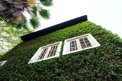 Träfönster på den gröna väggen Royaltyfri Bild