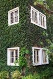 Träfönster på den gröna väggen Royaltyfri Fotografi