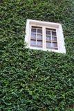 Träfönster på den gröna väggen Arkivfoto
