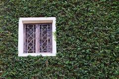Träfönster på den gröna väggen Royaltyfri Foto