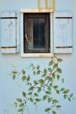 Träfönster på väggen med blomman Arkivfoto