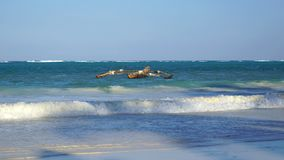 träfartyg, Matemwe, Zanzibar royaltyfria foton