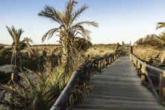 Träfotbro in mot stranden Arkivfoto