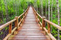 Trägångbana i överflödande mangroveskog av Thailand Royaltyfria Bilder