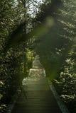 Trägångbana som täckas av träd och buskar som leder in i avståndet med några oskarpa sidor i förgrunden, brand royaltyfri bild
