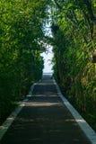 Trägångbana som täckas av träd och buskar som leder in mot en öppning i avståndet, brandö, NY arkivbilder