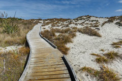 Trägångbana vid stranden på Tauparikaka Marine Reserve, Nya Zeeland royaltyfri fotografi