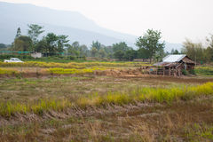 trägammal by för stugahus arkivfoton