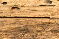 trägammal textur Royaltyfri Foto
