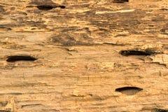 trägammal textur Fotografering för Bildbyråer