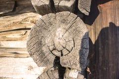 trägammal textur Tvärsnitt av trädet Royaltyfri Bild