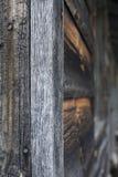 trägammal vägg Arkivbilder