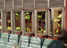 trägammala fönster för cafe Royaltyfria Foton