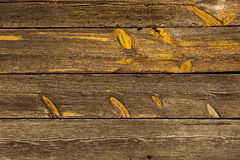 trägammala plankor Fotografering för Bildbyråer