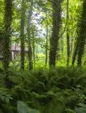Trägammalt hus i skogen Royaltyfria Bilder